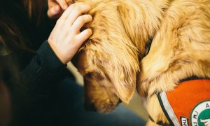 UBCO researchers explore the impact of canine cuddles on students